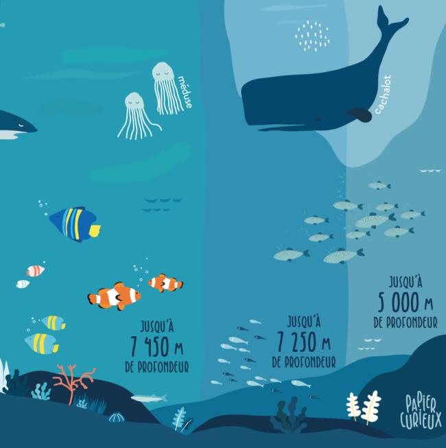 Affiche océan cachalot méduse