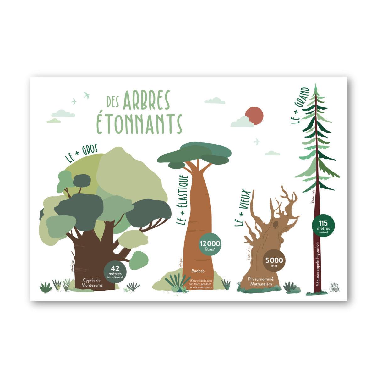 Affiche apprentissage enfant arbres étonnants baobab