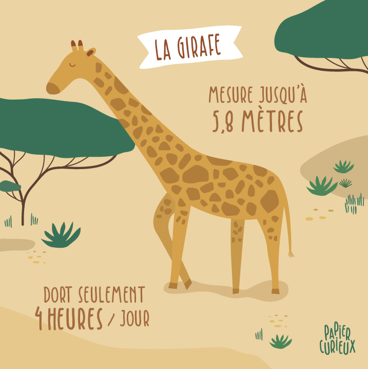 Girafe le saviez-vous ? fun facts