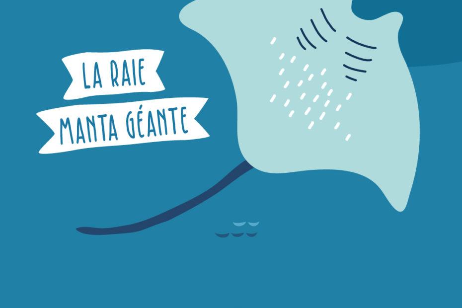 raie manta illustration