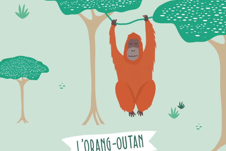 illustration orang-outan