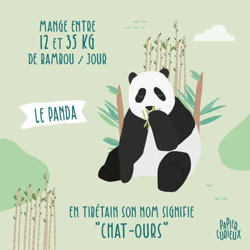Illustration panda tout savoir