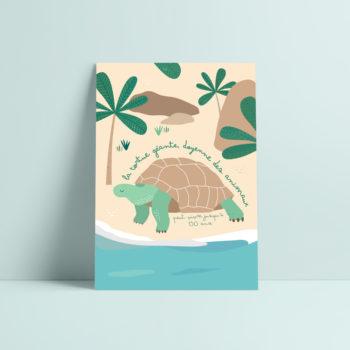 carte postale tortue illustration enfant